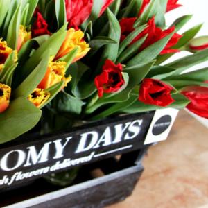 Spring Awakening: bunte Tulpen