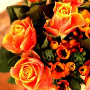 New Sunrise: Rosen mit Milchstern