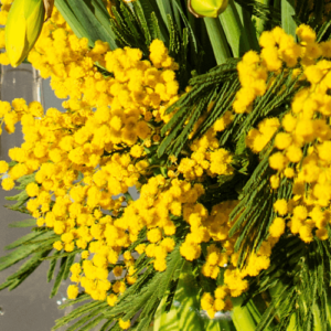 Mimose-Mimosa-pudica