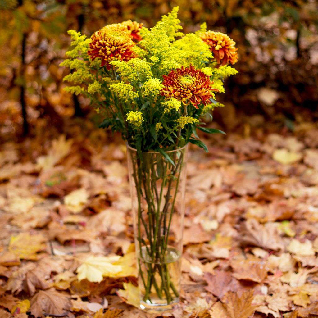 Edelchrysanthemen-Solidago