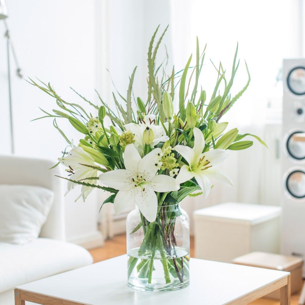 Grevillea-milchstern-lilien