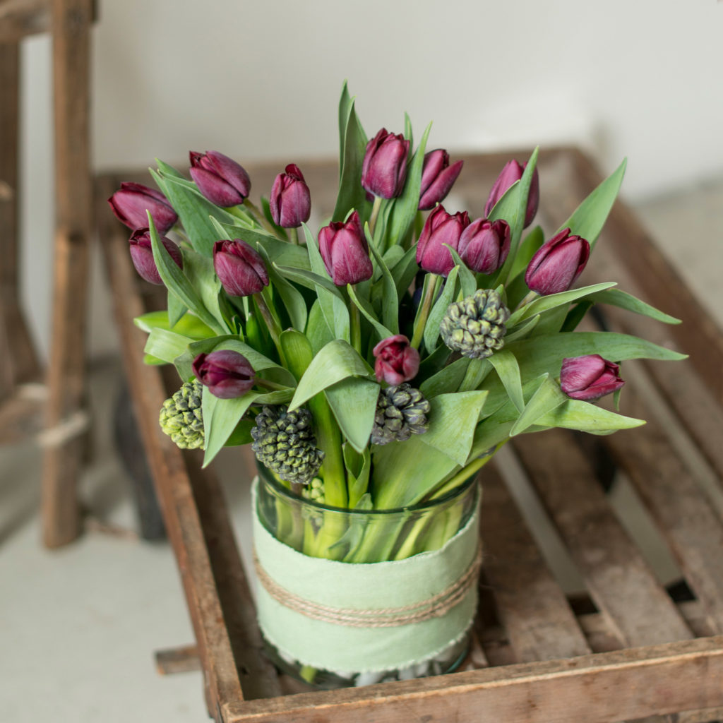 lila-Tulpen-Tulipa-Hyazinthe-Hyacinthus