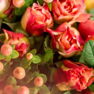 Rosen und Hypericum