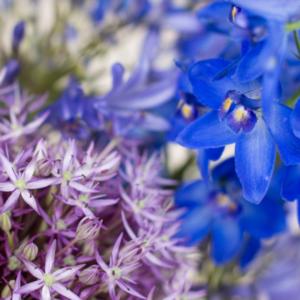 Allium, Schmucklilien und Delphinium