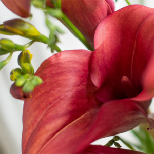 Natural Beauty: Calla und Freesien