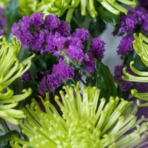Chrysanthemen und Statice