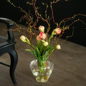 Franzoesische-Tulpen-Korkenzieherweide