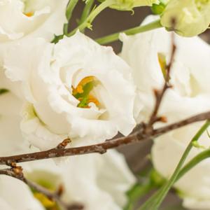 Japanrosen-Kirschbluetenzweige