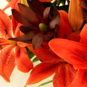 Sweet Solar: Lilien mit Leucadendron