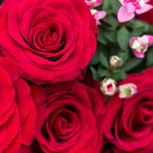 Rosen und Bouvardien