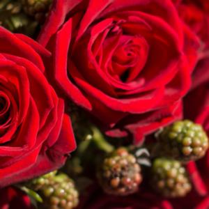 Rote Rosen und Brombeere