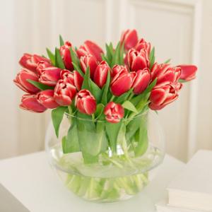 Rot-Weiße Tulpen