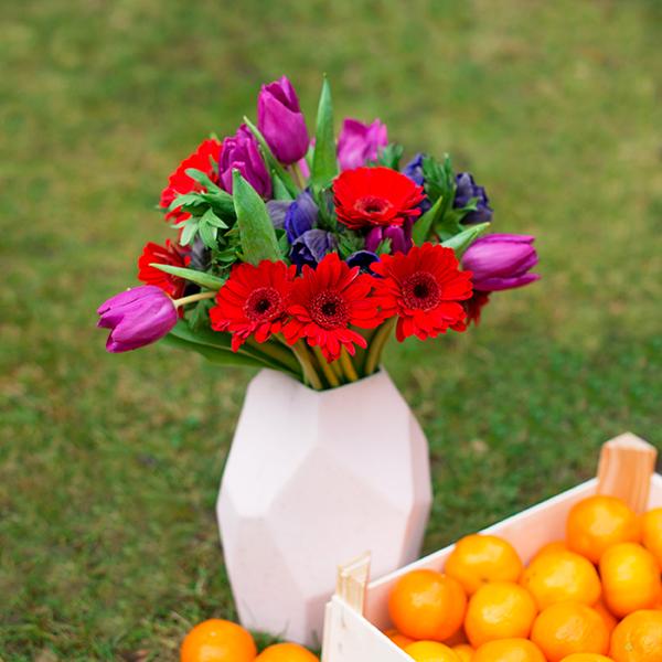Tulpen-Anemonen-Germinis