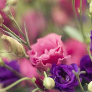 Hochzeits-Blumen