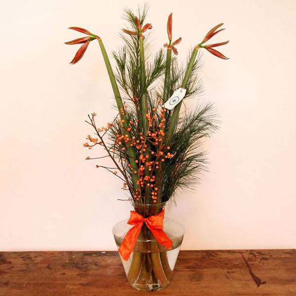 rote Amaryllis Stechpalme und Kiefer