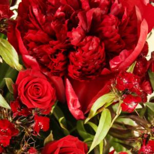 Rosy Rockstar: rote Rosen Pfingsrosen Bartnelken