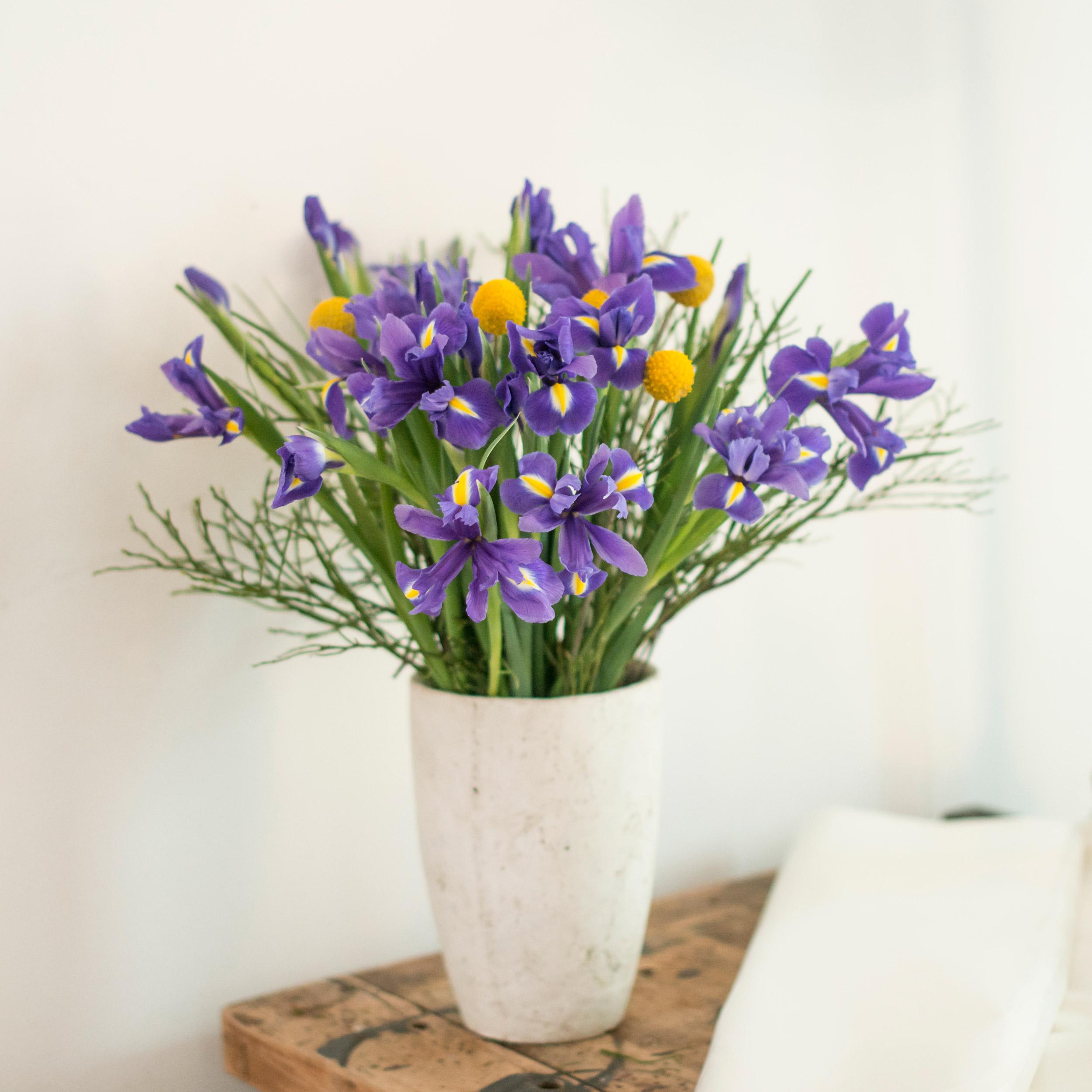 Iris Blumen Pflege