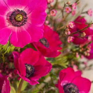 Anemonen und Waxflower