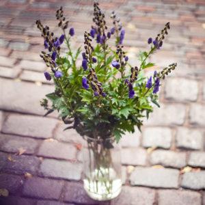 Typische Herbstblumen: Blauer Eisenhut