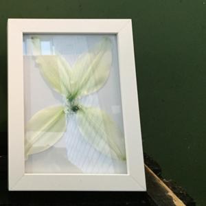 Blume in Bilderrahmen