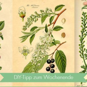 Blumentrend Herbarium