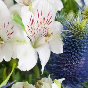Blue Ivy: Inkalilien mit Edeldisteln