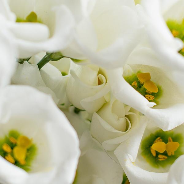 Japanrose Eustoma Bloomy Blog Blumentipps Und Mehr