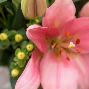 Lilien und Hypericum