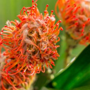 Nadelkissen Blume