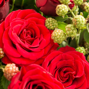Rose mit Brombeere