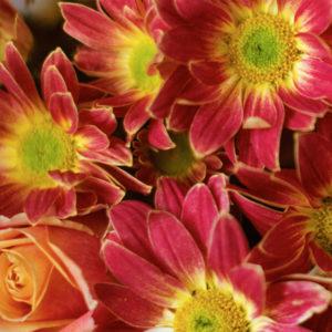 Orange Blossom: Rosen und Chrysanthemen