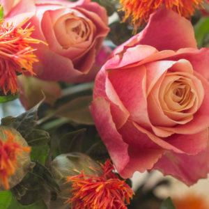 Rosen und Färberdisteln