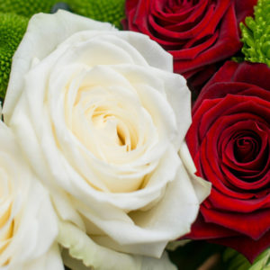 Rosen und Knopfsantini
