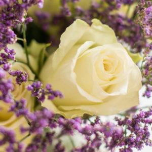 Rosen und Limonium