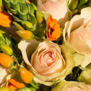 PASTEL POWER: Milchstern und Rosen