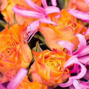 Pink Flamingo: Rosen und Nerinen
