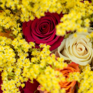 Sunny Side - Golden Colours: Rosen mit Goldrute