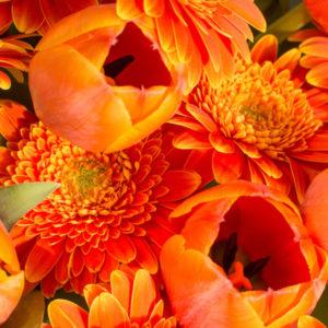ORANGE BLOSSOM: Tulpen und Gerbera
