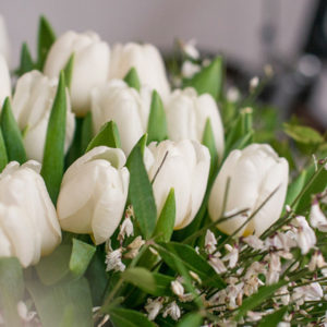 Early Bird: Tulpen und Ginster