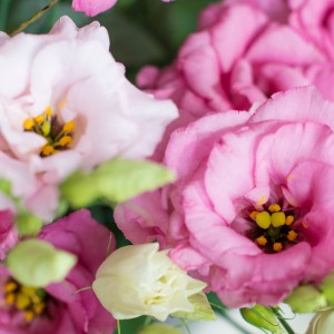 Japanische Rosen Nahaufnahme