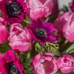 Blumen der Woche Spring Fever