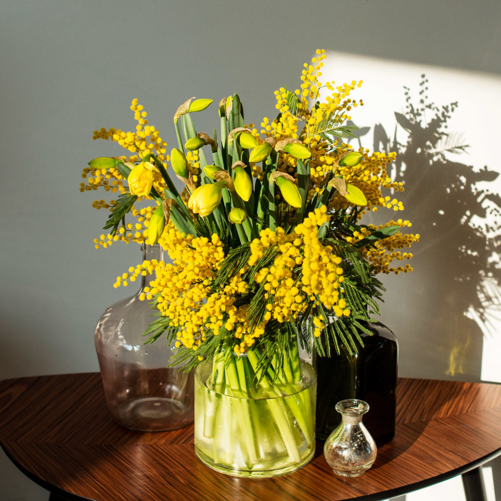 Narzissen-Narcissus-Osterglocken-Mimose-Mimosa pudica