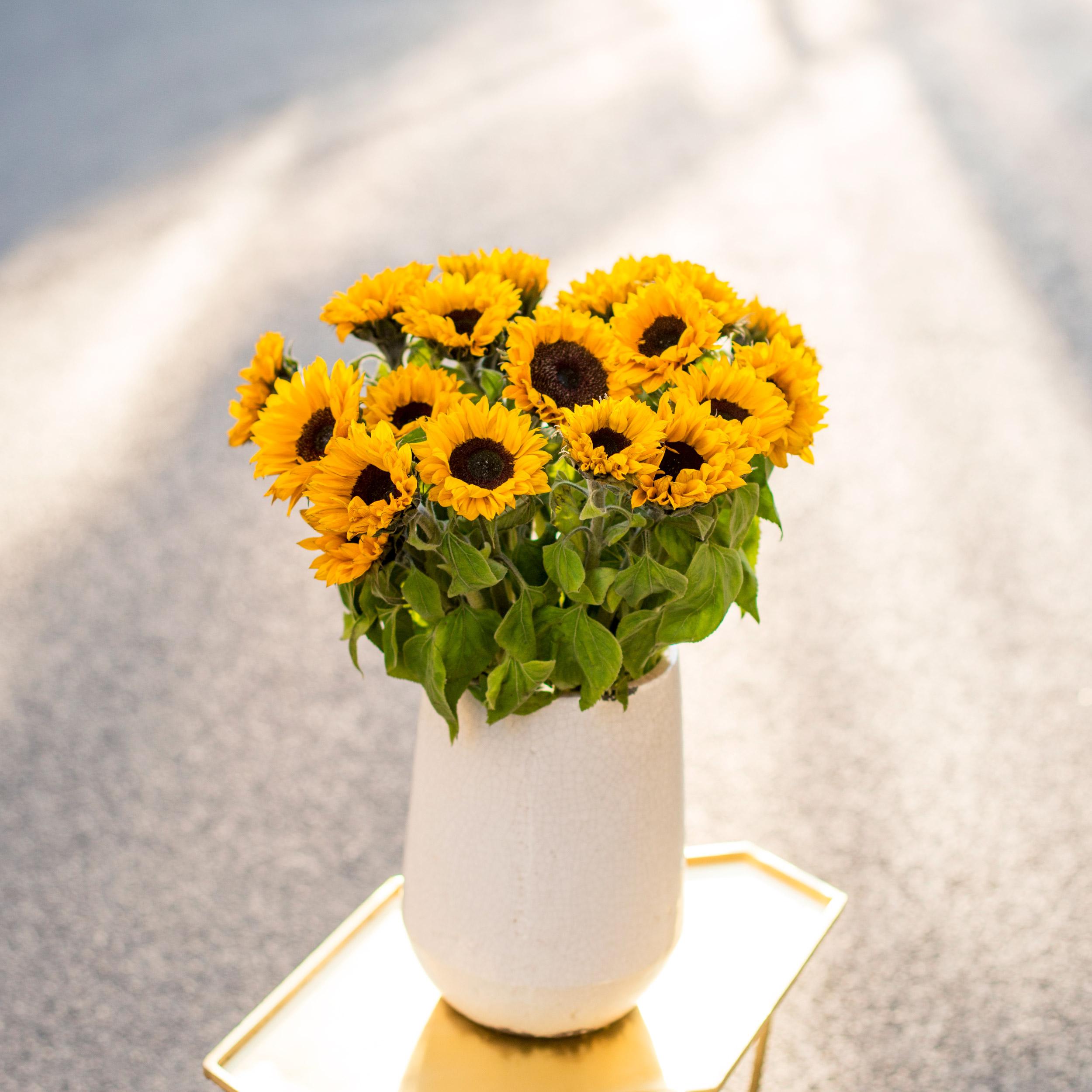 sonnenblumen bloomy blog blumentipps und mehr. Black Bedroom Furniture Sets. Home Design Ideas