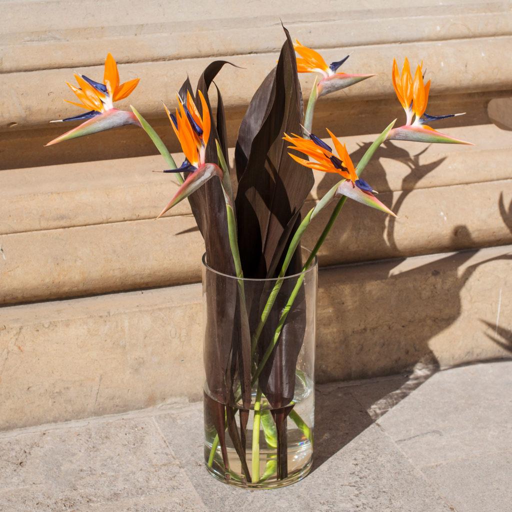 Strelitzie-Strelitzia-Paradisvogelblume-Papageienblume