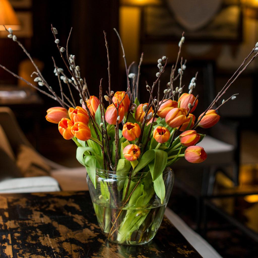 Tulpen-Weidenkätzchen