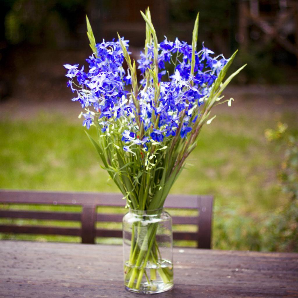 blauer-Rittersporn-Delphinium-mit-Minigladiolen-Acidanthera