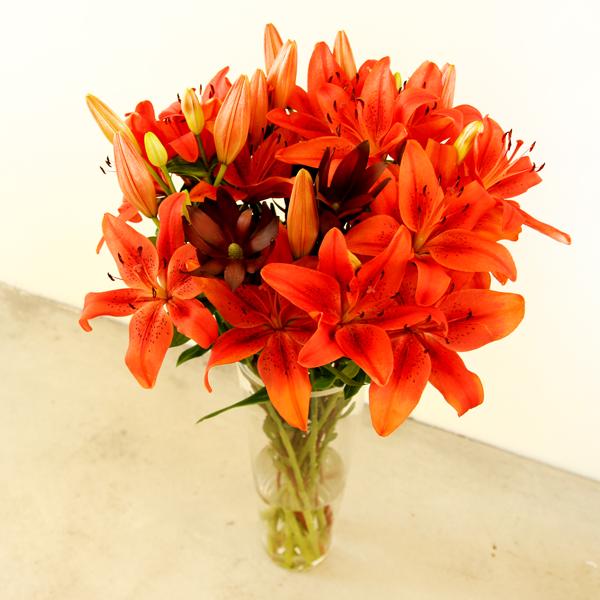 orange-Lilien-Lilium-mit-Silberbaeume-Leucadendron