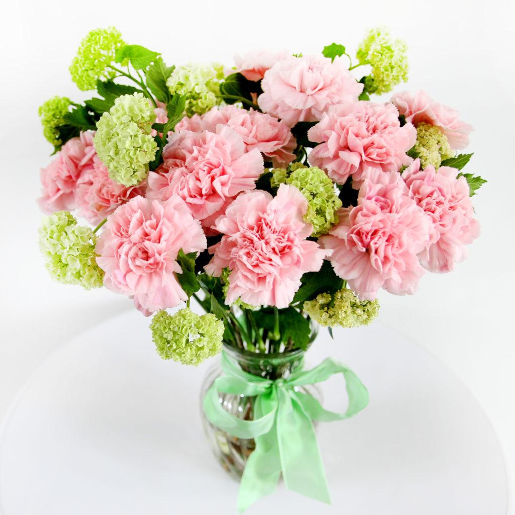 rosa-Nelken-Nelken-Dianthus-Schneeball-Viburnum
