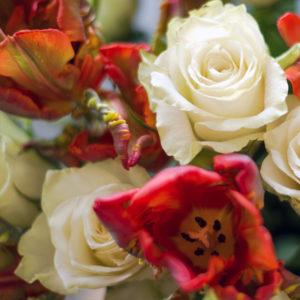 Weiße Rosen und Papageintulpen
