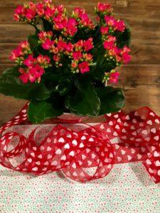 Topfpflanze dekorieren für DIY-Muttertagsgeschenk